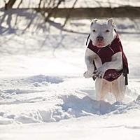 Adopt A Pet :: Gemma - Acushnet, MA