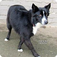 Adopt A Pet :: Lizzy - Lindsay, CA