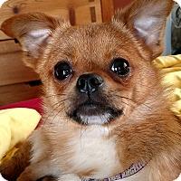 Adopt A Pet :: Travis - San Diego, CA