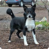 Adopt A Pet :: Bing - Yreka, CA