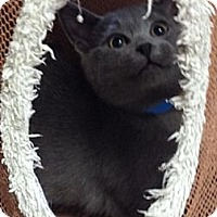Adopt A Pet :: Jethro - Byron Center, MI