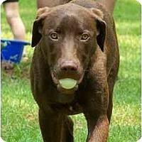Adopt A Pet :: Mudd - Cumming, GA