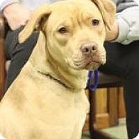 Adopt A Pet :: Kira - Dover, OH