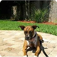 Adopt A Pet :: Ellie May - Tallahassee, FL
