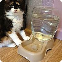 Adopt A Pet :: Kelsey - Monroe, GA
