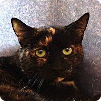 Adopt A Pet :: Sweet Pea - Albany, NY