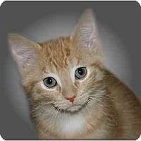 Adopt A Pet :: Trekky - Montgomery, IL