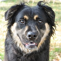 Adopt A Pet :: Elsa - Gainesville, FL