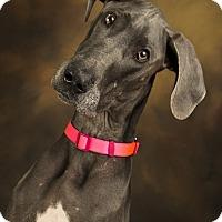 Adopt A Pet :: Mason - Anchorage, AK