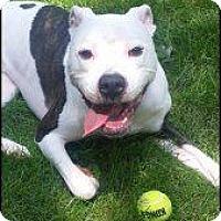 Adopt A Pet :: Tango - Berea, OH