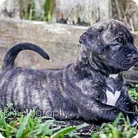 Adopt A Pet :: Webber - Miami, FL