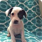Adopt A Pet :: Pixie's Pup - Pizza