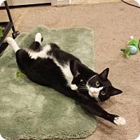 Adopt A Pet :: Garrison - Baltimore, MD