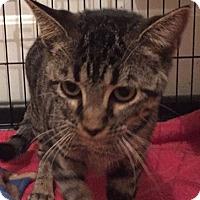 Adopt A Pet :: Daisy - Putnam, CT