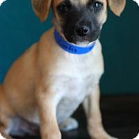 Adopt A Pet :: Curtis - Waldorf, MD