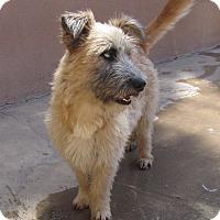 Adopt A Pet :: Javi - San Ysidro, CA