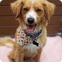 Adopt A Pet :: Rose - Los Angeles, CA