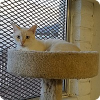 Adopt A Pet :: WASHINGTON - Phoenix, AZ