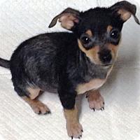 Adopt A Pet :: Bert & Ernie