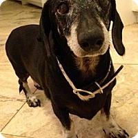 Adopt A Pet :: BINGO - Forest Ranch, CA