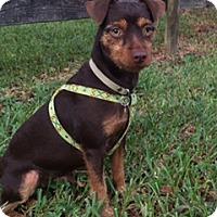 Adopt A Pet :: Cruiser - Davie, FL