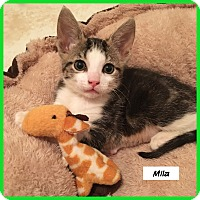 Adopt A Pet :: Mila - Miami, FL