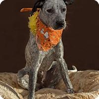Adopt A Pet :: Daisy Mae - Flint, MI
