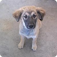 Adopt A Pet :: Heidi - Bonifay, FL