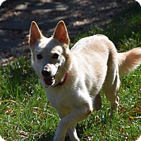 Adopt A Pet :: Lady - Charlotte, NC
