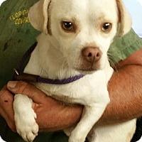 Adopt A Pet :: Howie - Gainesville, FL