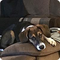 Adopt A Pet :: Sadie - Vandalia, IL