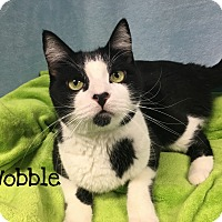 Adopt A Pet :: Wobble - Foothill Ranch, CA