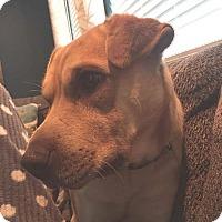 Adopt A Pet :: Chance - BONITA, CA