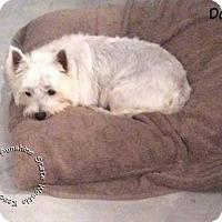 Adopt A Pet :: Dolley & Madison - Ponte Vedra Beach, FL