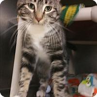 Adopt A Pet :: Garagey - Chippewa Falls, WI