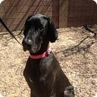 Adopt A Pet :: Nala in Tucson - Phoenix, AZ