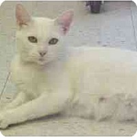 Adopt A Pet :: Athena - Lunenburg, MA