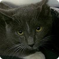 Adopt A Pet :: Sean Connery - Richboro, PA