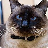 Adopt A Pet :: Peyton - Irvine, CA
