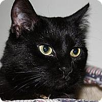Adopt A Pet :: Aretha - Lombard, IL