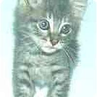 Adopt A Pet :: Lovey - Dallas, TX