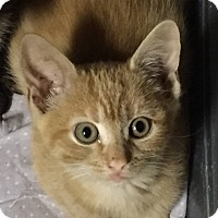 Adopt A Pet :: Little Mar - Plattekill, NY