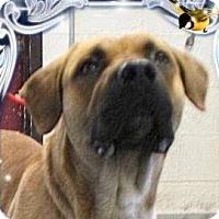Adopt A Pet :: REY - Red Bluff, CA