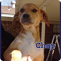 Adopt A Pet :: Chap meet me 4/8 - Manchester, CT