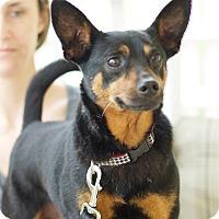 Adopt A Pet :: Sarge - Marietta, GA