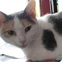 Adopt A Pet :: Sookie - Philadelphia, PA