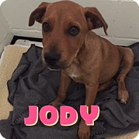 Adopt A Pet :: Jody - Barnwell, SC