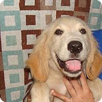 Adopt A Pet :: Bounty - Oviedo, FL