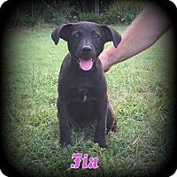 Adopt A Pet :: Fia (Aka:Fifi) - Denver, NC