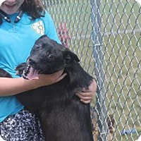 Adopt A Pet :: James - Savannah, TN